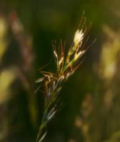 Маленький комарик