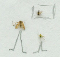 Где комар?