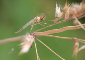 Забодай меня комар!