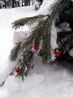 Чудеса новогоднего леса