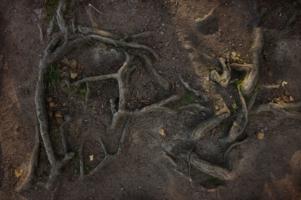 Послание леса (три буквы)