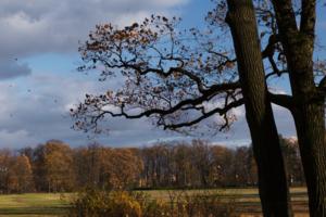 """""""Дерево - это иероглиф, что рисует земля на небе."""""""