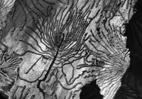 """""""Смерть дерева"""""""