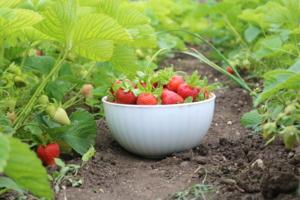 С одного поля ягоды