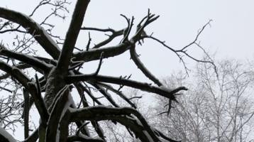 Китайская грамота: 冬 天 - зима