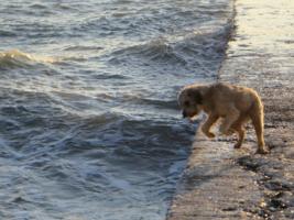 Охота на волны.