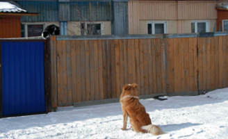 Василий, пошли гулять, хватит на заборе сидеть!