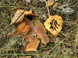 Сюрпризы осени в листве.