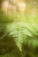 Таинство леса