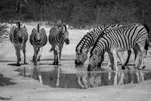 Африканские тройки