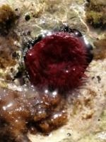 подводная жизнь моря