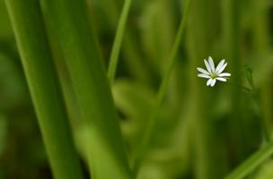 Затерявшийся в траве
