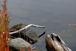 Встретились на водопое змея и крокодил...