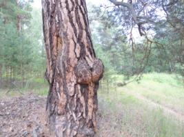 Повернулась к лесу передом, ко мне задом...