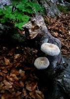 Старичок-лесовичок