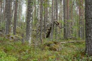 Добро пожаловать в лес!