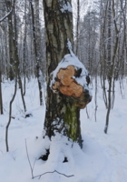 Собачья зима