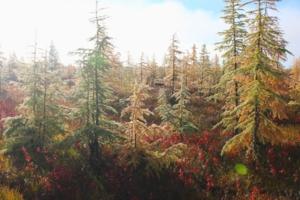 Осенний зайчик