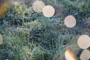 первые заморозки