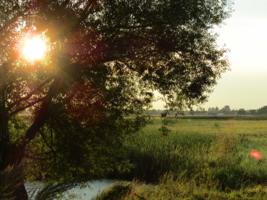 Немного солнца в зеленой траве