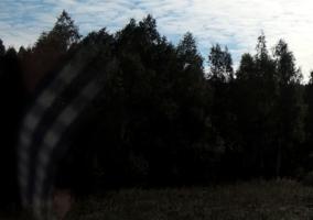 Во поле берёза стояла...