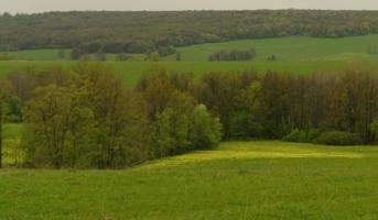 Разная зелень