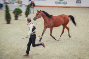 Бегущий с конём