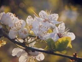Весна р