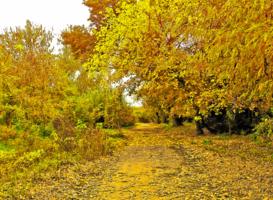 Осенней красоты шуршащая печаль...