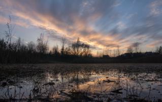 Закат на заросшем пруду