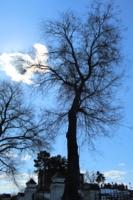 Облако в плену ветвей