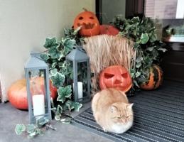 Готова к хэллоуину