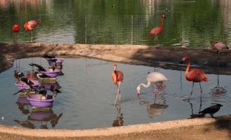 Фламинго и вороны....