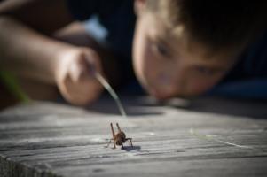 Детское любопытство