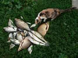 А эта рыбка - МОЯ!