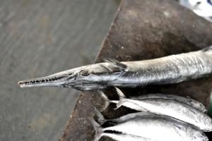 Рыбный рынок_Калангут