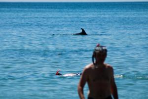 Увидеть дельфина и вернуться