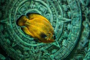 День в аквариуме