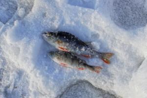 Ловись, рыбка, большая и маленькая!