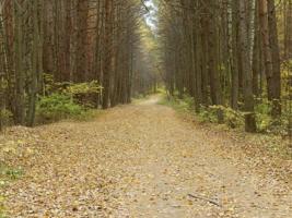 В лесах.