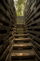 Лестница в лес?