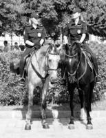 кони мои кони