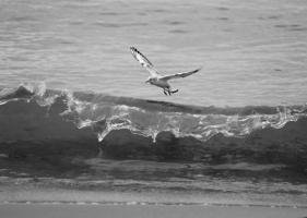 ...чайка над волной...