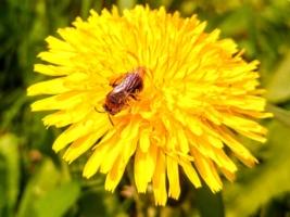 Ресторан для пчёл