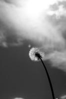 Дуновение ветра