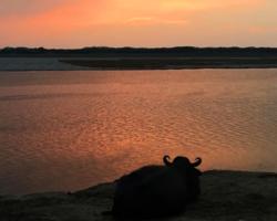 Медитация буйвола