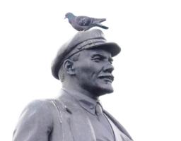 Любимое место для голубя