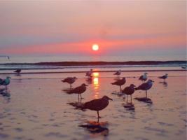 С чайками встречаю рассвет