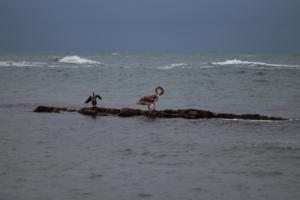 Раненый лебедь