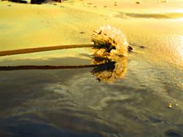 На мокром песке